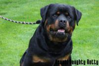 Clyde Naughty Rotty