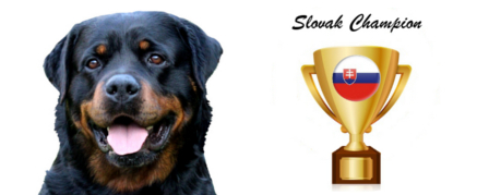Boss Naughty Rotty Slovak champion Rottweiler